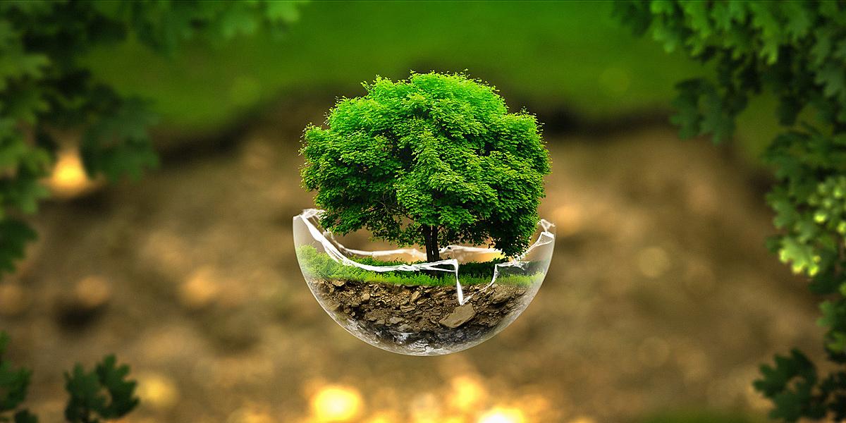 O Ser e o Dever Ser do Meio Ambiente, artigo de Wellington Barros